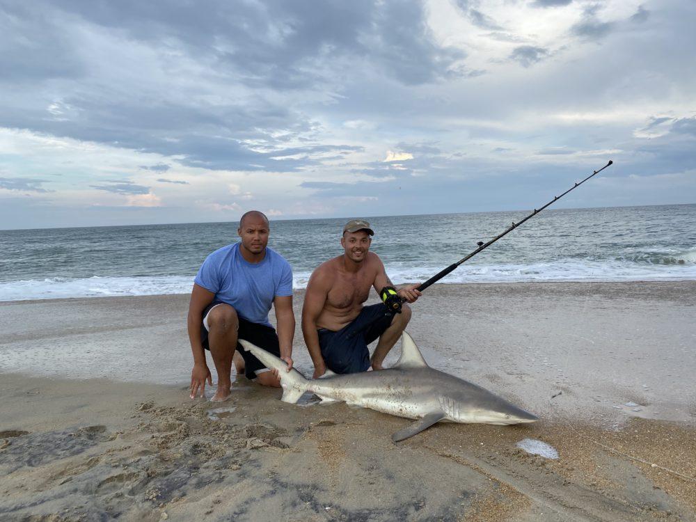 Tyler Shark 2